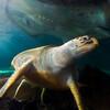 Sydney Aquarium  Conservation Fund (SACF)