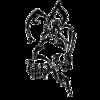 Lynxz
