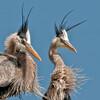 Heron-Images