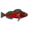 fishfolkart