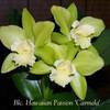 Mostlyorchids