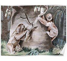 Three Toed Sloths Vintage Art Poster