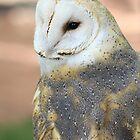"Barn Owl - ""Edgar"" by Alyce Taylor"