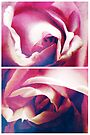 Spring - Roses - Blue Moon by Sybille Sterk