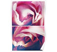 Spring - Roses - Blue Moon Poster