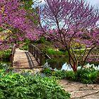 Garden Stroll by ECH52