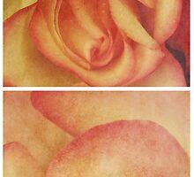Spring - Roses - Happy Birthday I by Sybille Sterk