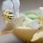 white flowers in repose by Hege Nolan