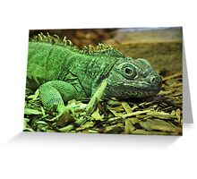 Iguana Greeting Card