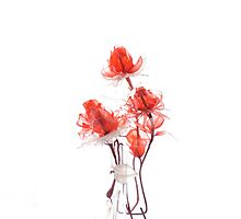 Transclucent Flowers by jbowler