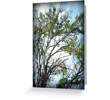 Holga Tree Greeting Card