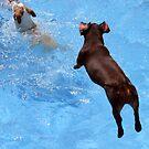 JUMP AND.............SPLASH !!! by Heidi Mooney-Hill
