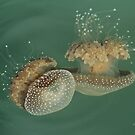 Jellyfish by Robert Abraham