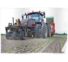Planting Celeriac  Poster