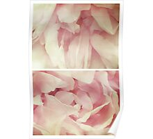 Spring - Roses - Palest of Pinks Poster
