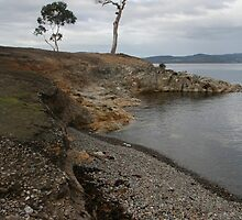 Tasmania Remote Shore Line V by Stephanie Chappell