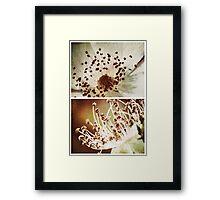 Spring - Roses - Wild at Heart Framed Print