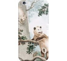 Virginian Opossum iPhone Case/Skin
