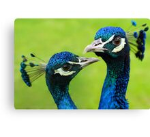 Perfect couple Canvas Print