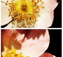 Spring - Roses - Wild by Sybille Sterk