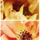 Spring - Roses - Yellow and Pink by Sybille Sterk