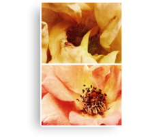 Spring - Roses - Yellow and Pink Canvas Print