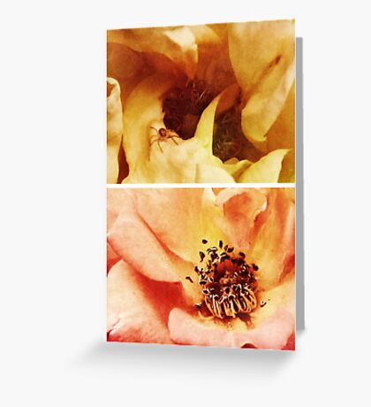 Spring - Roses - Yellow and Pink Greeting Card
