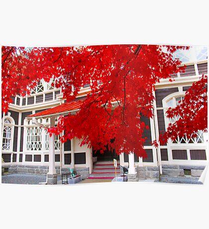 """Momiji""- Japanese Maple Tree Poster"