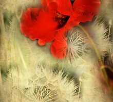 Poppylion by Sonia de Macedo-Stewart
