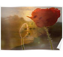 Dreaming of Poppies Poster