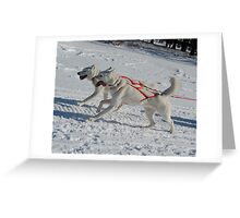 Dog Sledding Greeting Card