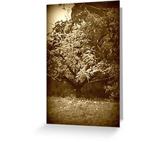 Holga Tree Greeting Card