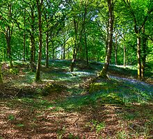 The Beech Wood by Jamie  Green