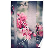 A delicate Spring Poster