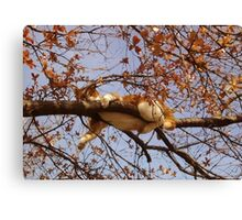 Cat on a tree Canvas Print