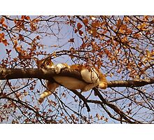 Cat on a tree Photographic Print