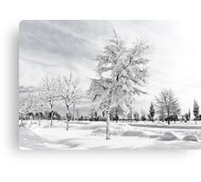 Hugged by snow (BW) Canvas Print