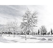 Hugged by snow (BW) Photographic Print