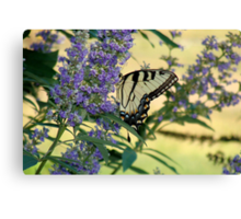 Tiger Swallowtail On Chaste Tree Number 2 Canvas Print