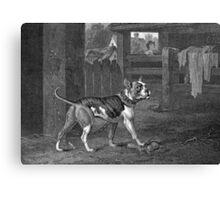 Bulldog - Black and White Art Canvas Print