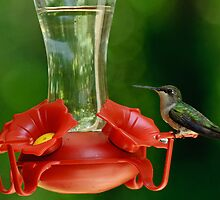 The Hummers are Back by Robert H Carney