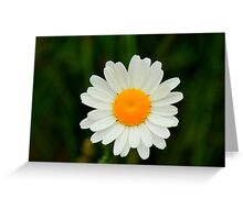 Ox-Eye Daisy, Manfield Scar, River Tees, England Greeting Card