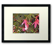 Fabulous Fuchsia Framed Print
