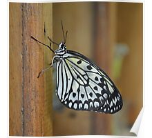 Tree Nymph on Wood Poster