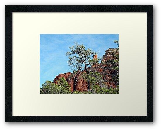 Tall Trees, Rocky Spires by Lynda Lehmann