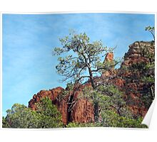 Tall Trees, Rocky Spires Poster