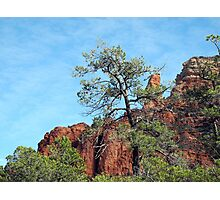 Tall Trees, Rocky Spires Photographic Print