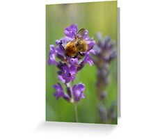 Bee on Lavender Greeting Card