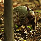 Armadillo by KatsEyePhoto