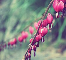 Bleeding Hearts - A Sign of Spring by Amanda Press